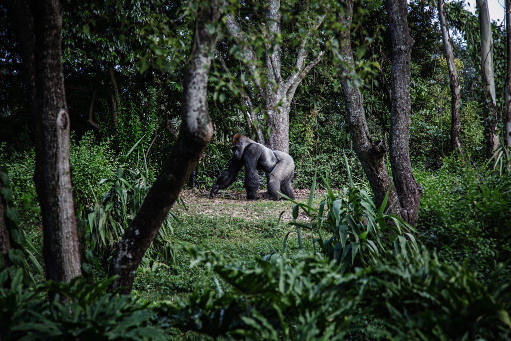 Mooiste vakantiebestemmingen Virguna Nationaal Park (1)