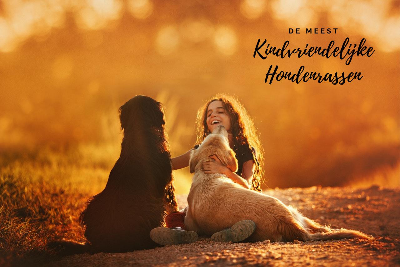 Kindvriendelijke hondenrassen; dit zijn de beste gezinshonden om jouw familie mee uit te breiden!