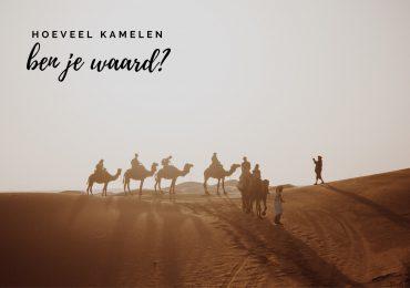 Hoeveel kamelen ben je waard? Hier kun je het uitrekenen!