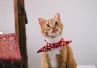 Waarom katten blij worden van een kattenluik